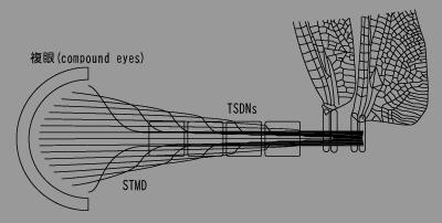 視覚システム.png