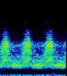 クマゼミスペクトラム.jpg