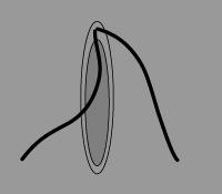 ミクロガメートの鞭毛.png