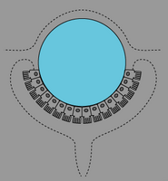 動物の光受容体細胞配列03.png