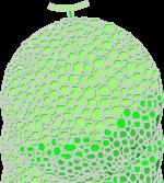 回虫卵1.png