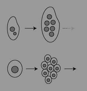 多細胞.png