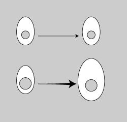 核細胞分裂.png