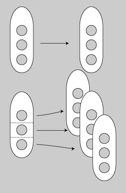 核細胞分裂3.png