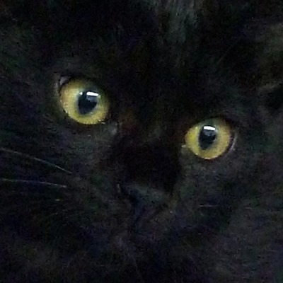 猫01.jpg