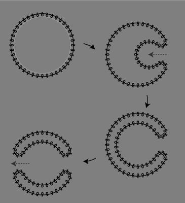生命の進化01.png