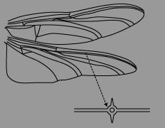 翅5.png
