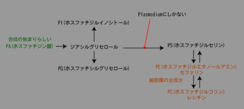 脂質の合成.png