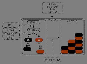 色の遺伝子.jpg